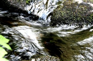 elaman_vetta